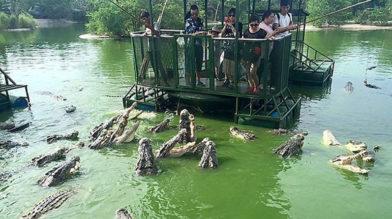 Самый страшный в мире аттракцион с крокодилами